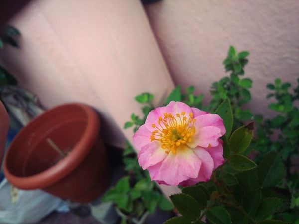 🌸🌼Flöwer-Löver😜 Beauty In Nature Flower Head Nature Plant