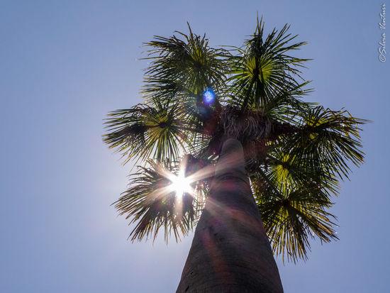 Buriti Jalapão State Park Jalapão Palm Tree Sky Sun Tocantins Tocantins Brazil Tree