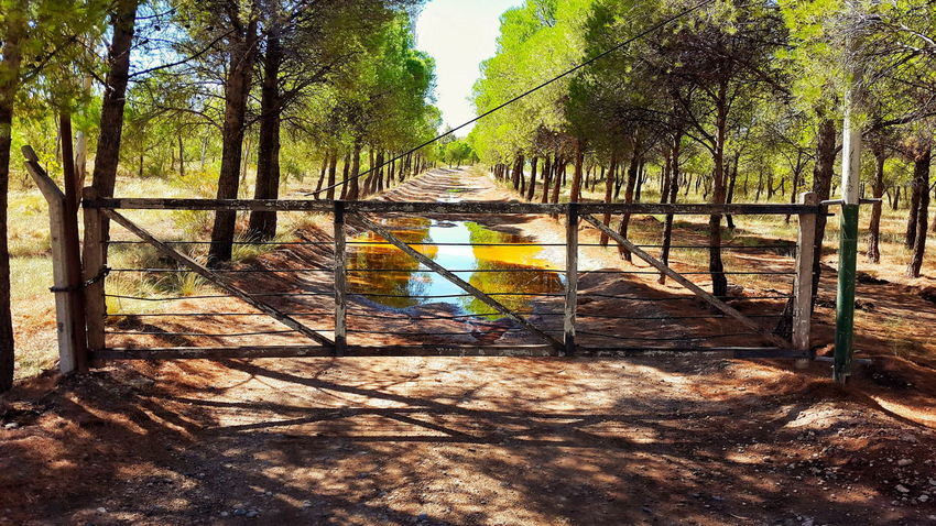 Tree Nature Sunlight Outdoors Day Playground No People Outdoor Play Equipment Beauty In Nature Sky Tranquera Campo Punto De Fuga