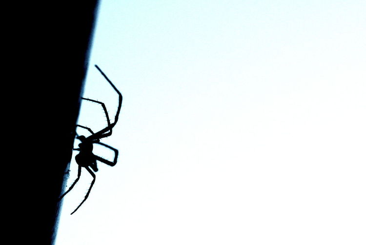 Insect Animal Themes No People Animals In The Wild Close-up Outdoors Nature Day Sky Spider