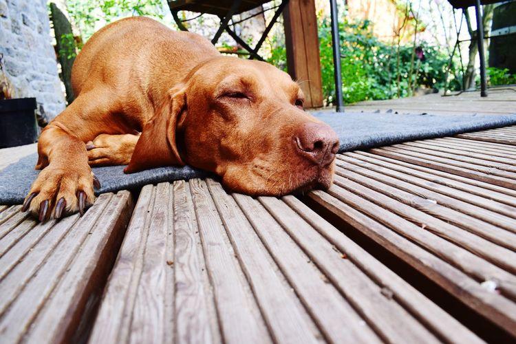 Close-up of dog lying on wood