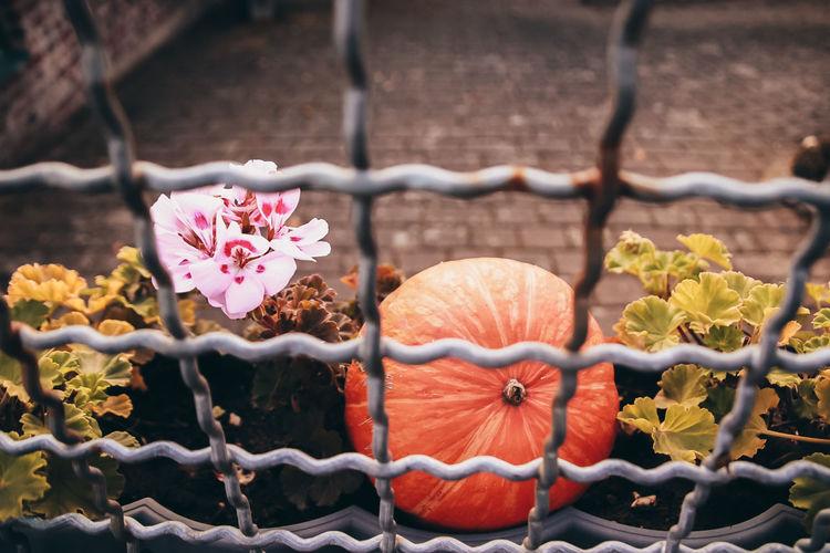 Flowers Pumpkin