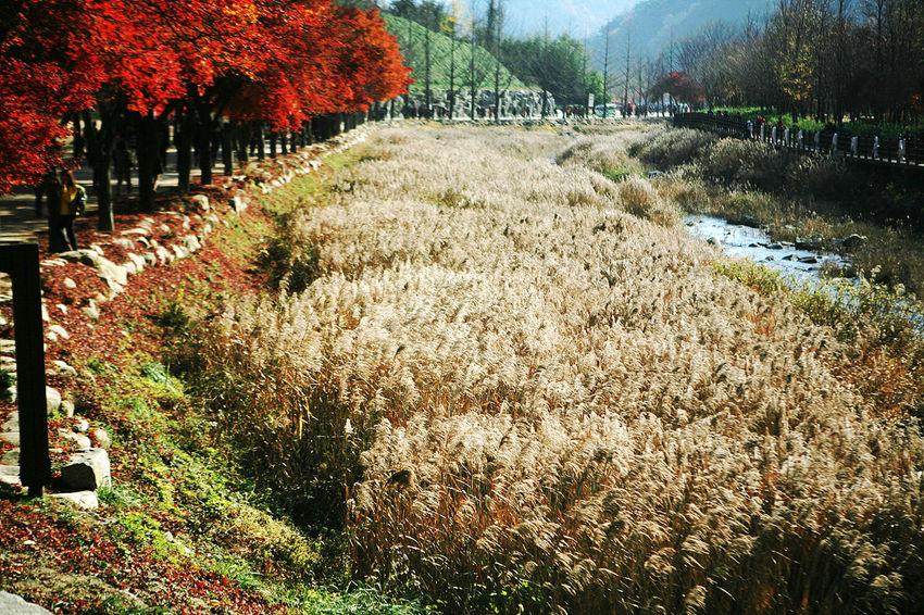 Munkyung Brook Munkyungsaejae Autumn Autumn Foliage Autumn Leaves South Korea Korea