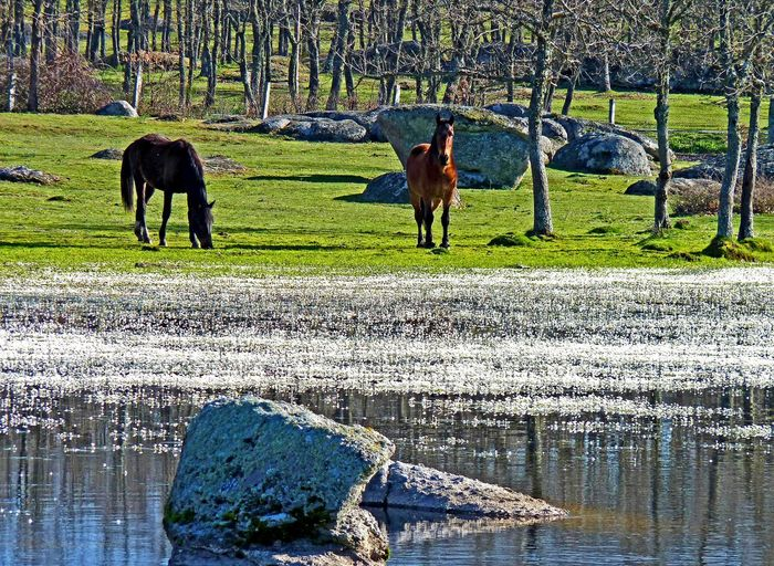 Agriculture Agua Animal Themes Beauty In Nature Caballo Day Domestic Animals Field Grass Grazing Green Color Growth Horse Lago Livestock Mammal Nature No People Outdoors Sunlight Tree Water