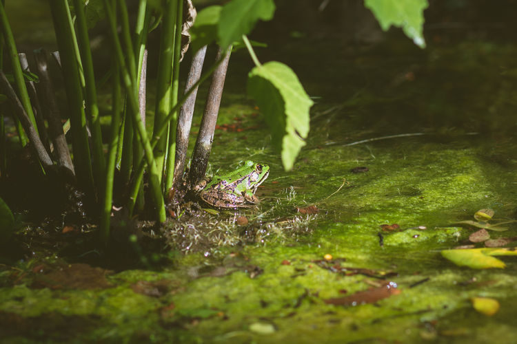 View of frog in lake