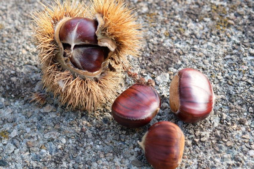 Nut - Food Close-up