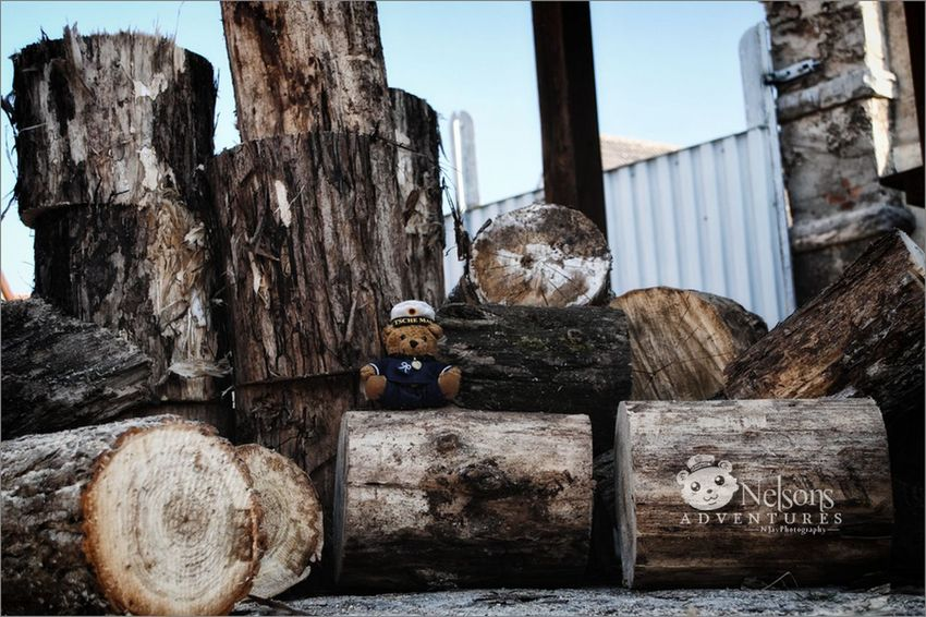 Hard working Nelson. Firewood for next winter. NelsonsAdventures Nature Wood Streamzoofamily