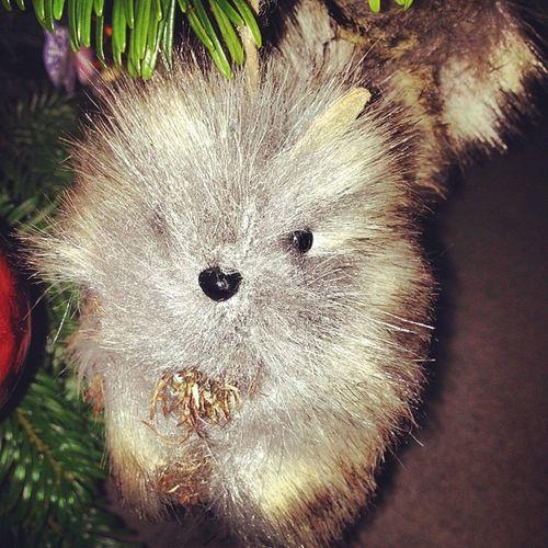 Xmastree Xmasdecoration Grey Squirrel for sophie tree toy risefilter green instahub instanow interesting instacapture home hohoho winter 11sleeps for ? cute xmas christmas festive cheer