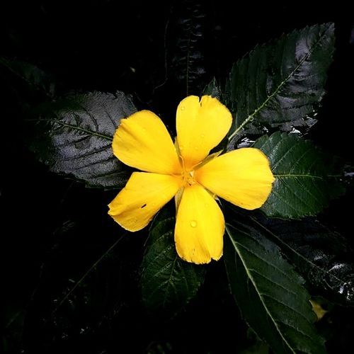 Yellow Flower Beauty In Nature Freshness Growth Close-up Day Outdoors Withmyfriend Vacations Vitality
