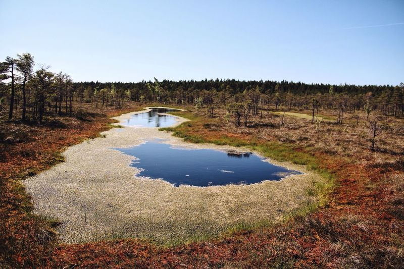 Panoramic view of marshland on landscape