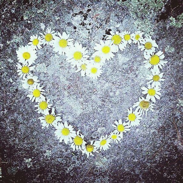 L'amour n' existe pas que dans les champs... Relaxing Flowers