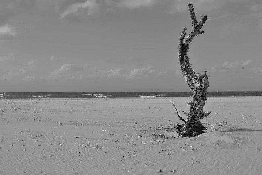 Coastline Ocean Beachphotography