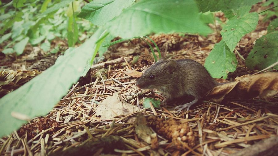 Mouse Outdoor