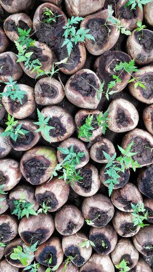 go green Plant Plants Recycling Recycle Nursery Nursery Garden Neem Tree Seeds Seeds Of Life
