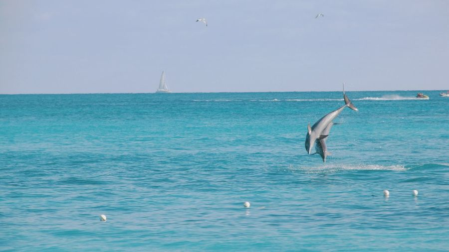 Jump! Hello World Traveling Travel Photography Sea Dolphins Animals Enjoying Life Taking Photos Bahamas