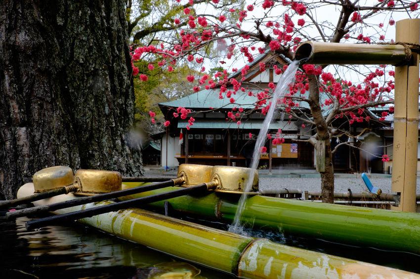 焼津神社 Fujifilm Fujifilm X-E2 Fujifilm_xseries Shrine Yaizu Yaizu Jinja 焼津 焼津神社 神社 神社仏閣 静岡県