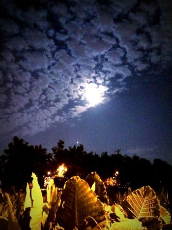 Moonlight Evening Sky Full Moon 🌕 Clouds & Sky Weather Homeside  Perspectives On Nature
