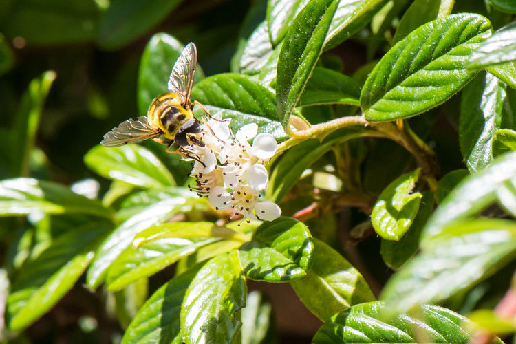 Close-up of bee on plant