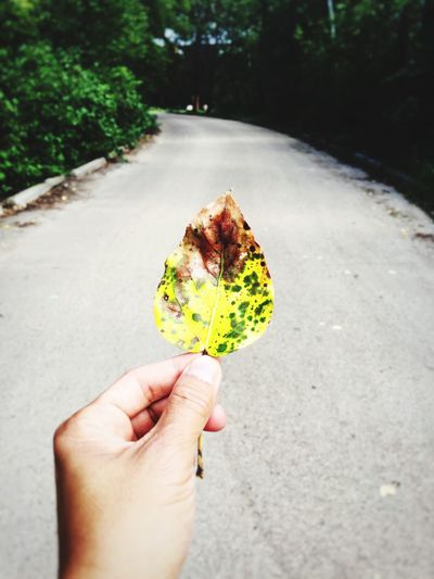 Close-up of hand holding leaf on road