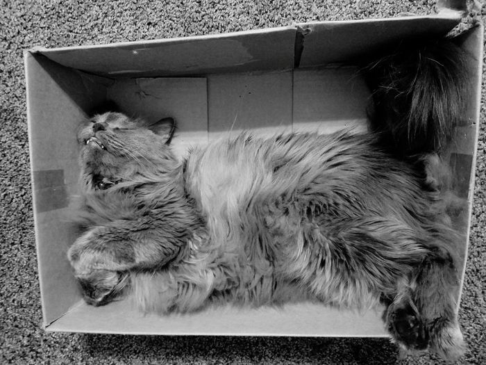GIGIO'S BOX-NAP MUR B&W Black And White Cats Catnap The Art Of Photography The Song Of Light Monocrome Photography TCPM Break The Mold Art Is Everywhere