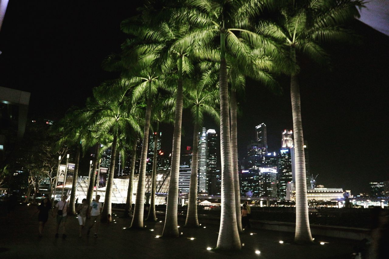 PANORAMIC VIEW OF PALM TREES AND CITY AT NIGHT