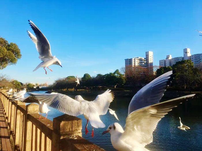 日本東京 Animal Themes Bird Water Animals In The Wild Flying Seagull Spread Wings Business Stories