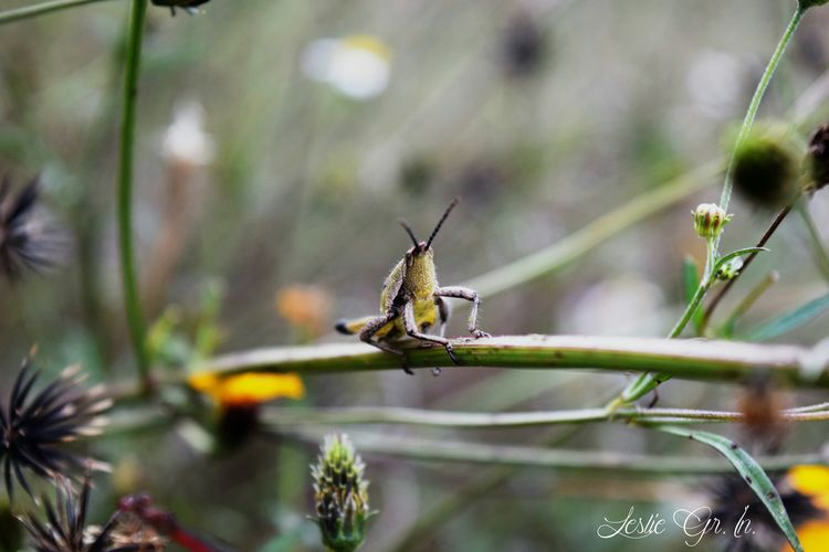 Naturaleza Leslie_Gr_In Animals Insectos Nature Animales