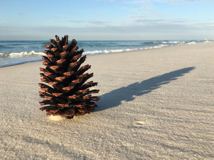Pine cone on the beach Beach Beauty In Nature Close-up Day Horizon Over Water Nature No People Outdoors Pine Cone Sand Scenics Sea Shadow Sky Sunlight Tranquility Water
