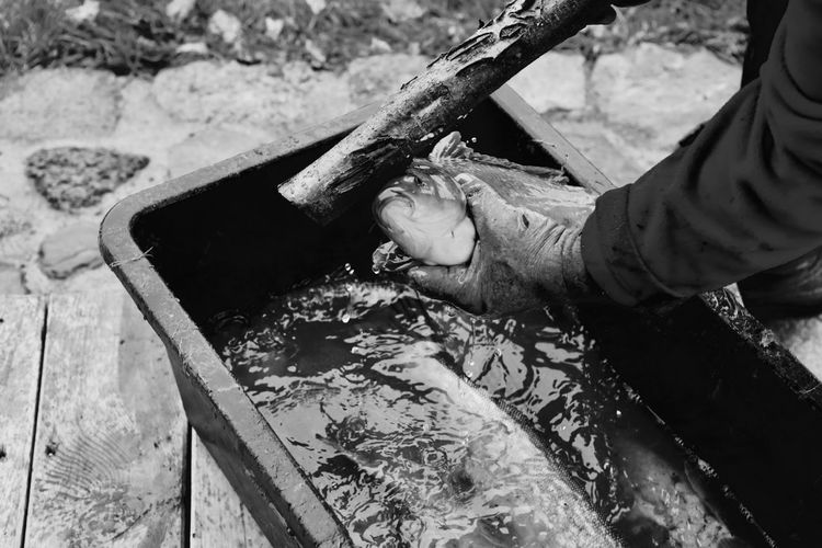 Cropped image of hand holding fish and wood on container