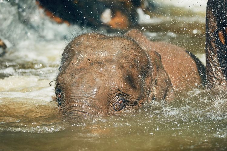 Close-up of elephant in river
