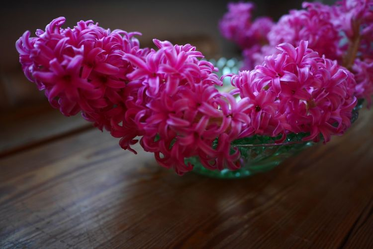 Hyacinths Full Frame Detailed Nature Still Still Life Wallpaper Backgrounds On The Table Wooden Tabletop Pink Color Brightness Bright Colors Flourishing Flourish Cerise Color Hyacinth Flower Hyacinths Hyacinth Flower Nature Beauty In Nature Petal Growth Fragility No People Blooming Freshness Flower Head Day Close-up
