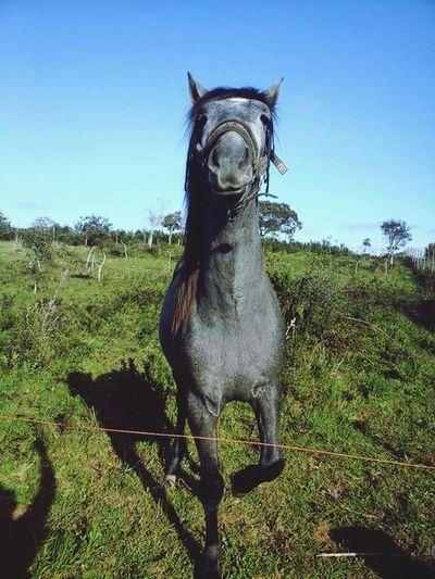 Horse I Love Horses