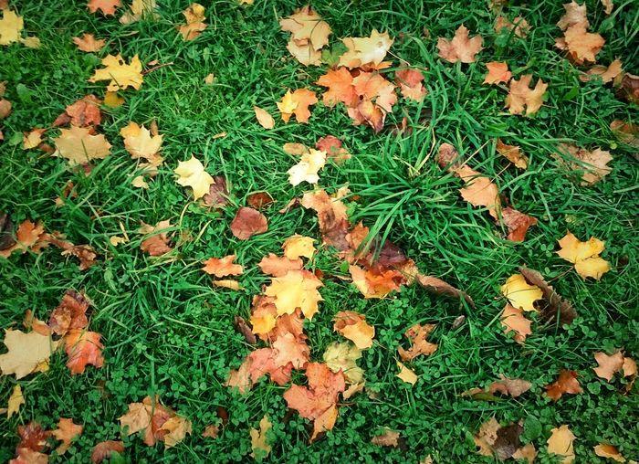 Autumn Autumn Leaves Colors Of Autumn