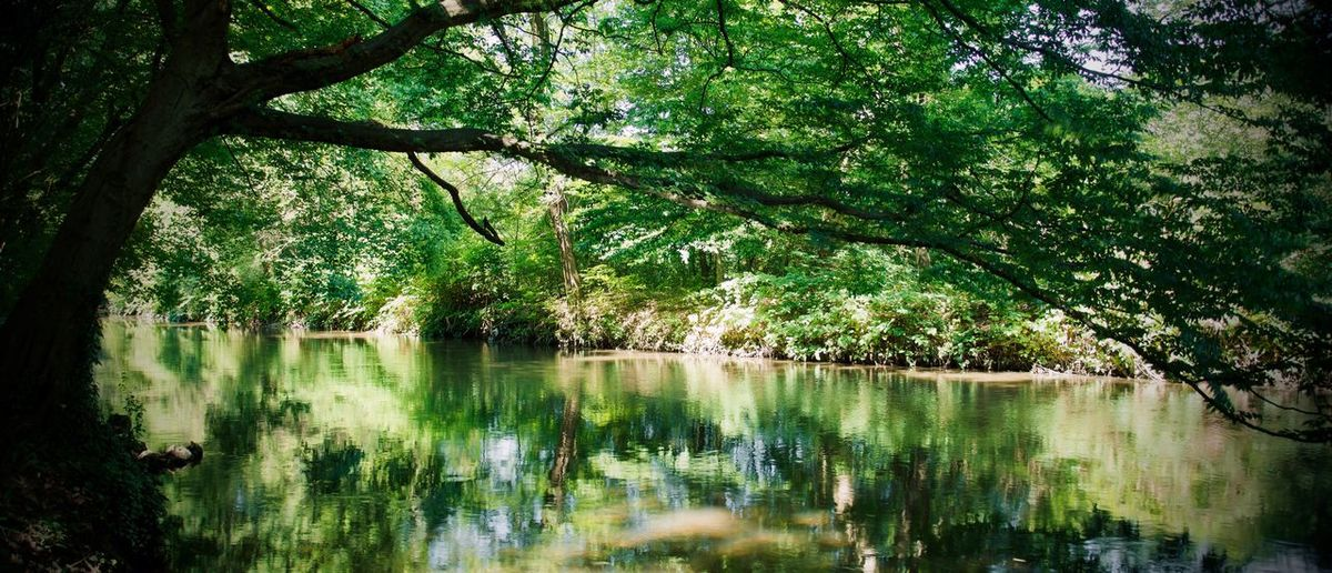 Monza's park Tree Plant Water Reflection Lake Tranquility Growth Nature Beauty In Nature Green Color Branch Reflection Lake No People Scenics - Nature Day Tranquil Scene Outdoors Forest Land Non-urban Scene
