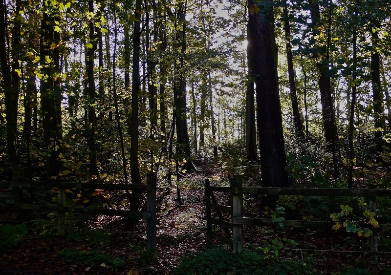 Woodland glade. Atmospheric Country Walkway Forest Outside Sunlight And Shadow