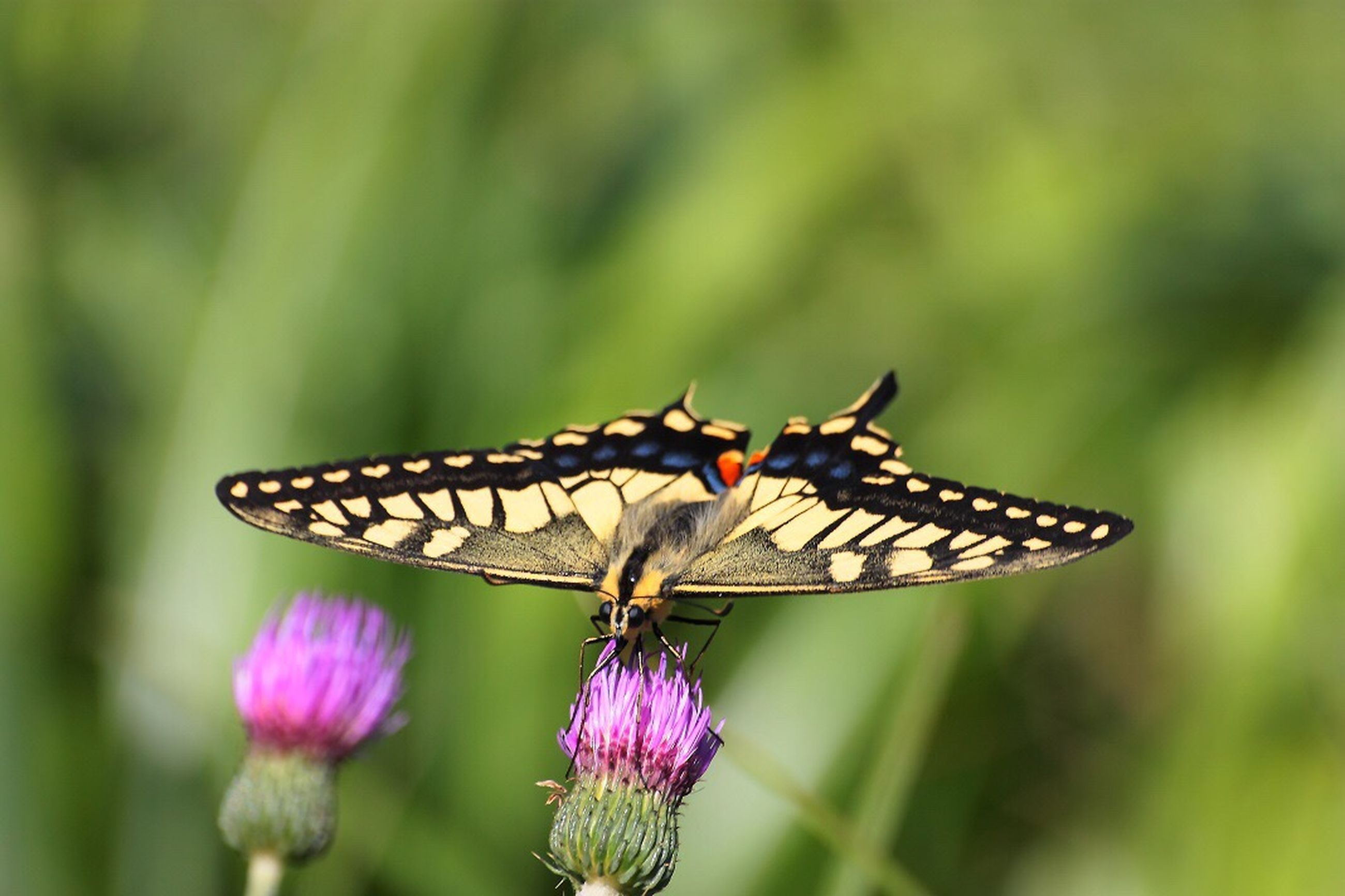 insect, animals in the wild, animal themes, one animal, plant, nature, beauty in nature, butterfly - insect, focus on foreground, close-up, flower, outdoors, no people, growth, animal wildlife, day, fragility, butterfly, pollination, freshness, perching, spread wings