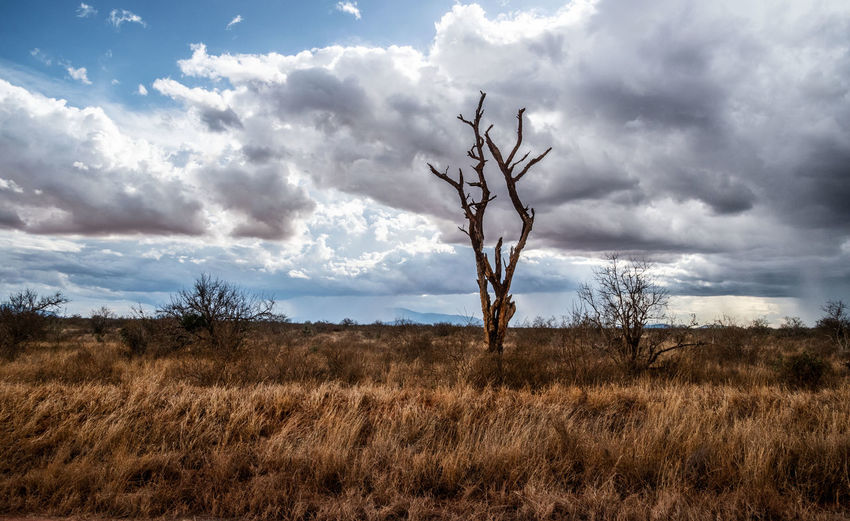 Cloud - Sky Sky Plant Environment Land Tranquility Bare Tree Non-urban Scene Landscape Field Tree Beauty In Nature Scenics - Nature No People Tranquil Scene Nature Day Grass Remote Outdoors Dead Plant Isolated Arid Climate Dry Savannah Tree Lone Tree