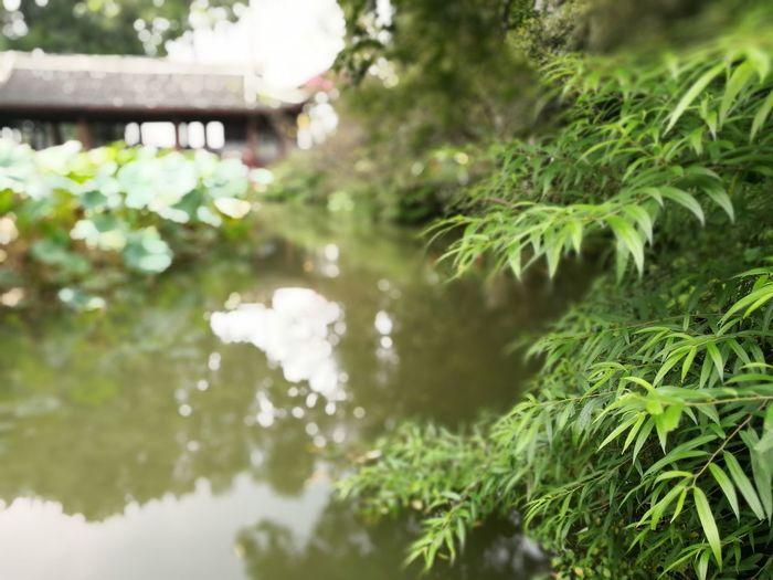 杜甫草堂 蓮花池