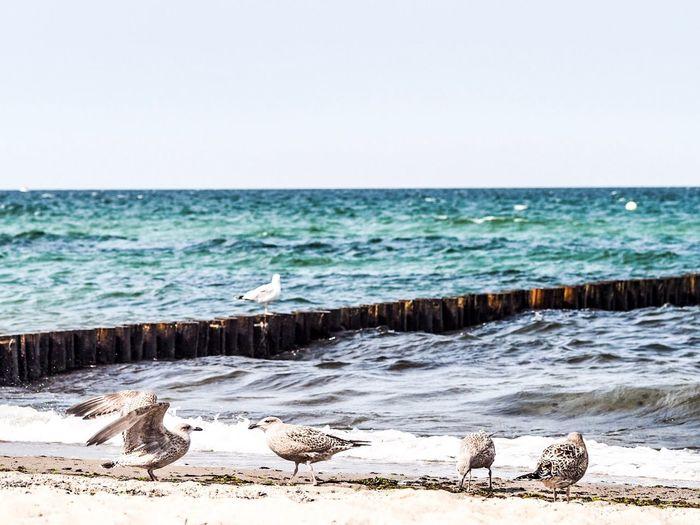 Birds Olympus