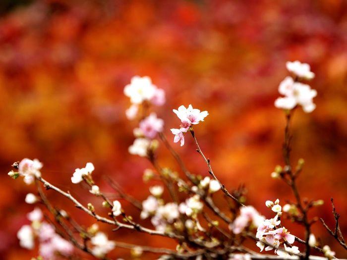 Flower Tree Flower Head Branch Beauty Springtime Autumn Leaf Pastel Colored Closing