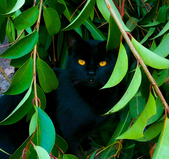 Natural vs digital Black cat panther , green tree by @elvio Nature Green Color Beauty In Nature Cats Background Photography Wallpaper Design Art Gallery ArtWork GalleryOfModernArt Poster Art Black Color Interior Decorating Springtime Interior Design Painting On The Wall Artphotography Outdoors Beauty In Nature EyeEmNewHere First Eyeem Photo Wallpaper, EyeEm Animal Lover Animal Themes Domestic Animals EyeEmNewHere EyeEmNewHere EyeEm Diversity The Secret Spaces Break The Mold Break The Mold Art Is Everywhere The Great Outdoors - 2017 EyeEm Awards The Street Photographer - 2017 EyeEm Awards BYOPaper! Place Of Heart The Street Photographer - 2017 EyeEm Awards