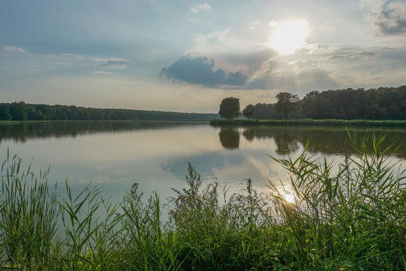 @ a fish pond.