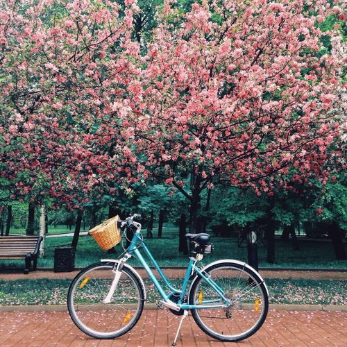 Flower Bicycle Transportation Mode Of Transport Nature Outdoors Tree No People Land Vehicle Beauty In Nature Day Bicycle Basket