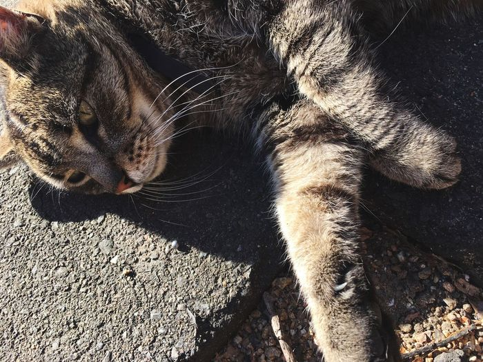 Close-Up Of Cat Lying On Street