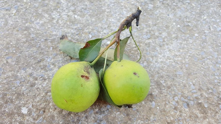 twi organic pears Agriculture Healthy Eating Organic Food Organic Farm Pears Two Pears NO Pesticides!!! Fruit Leaf Close-up Green Color Food And Drink Plant Life Farm
