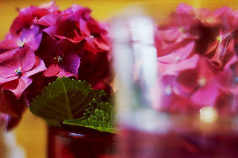 Flower Best