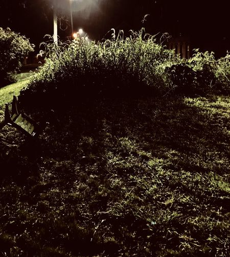 At The Mill with John Beauty In Nature Field Forest Grass Green Color Growth High Angle View Illuminated Land Nature Night No People Outdoors Plant Tranquil Scene Tranquility Tree Water