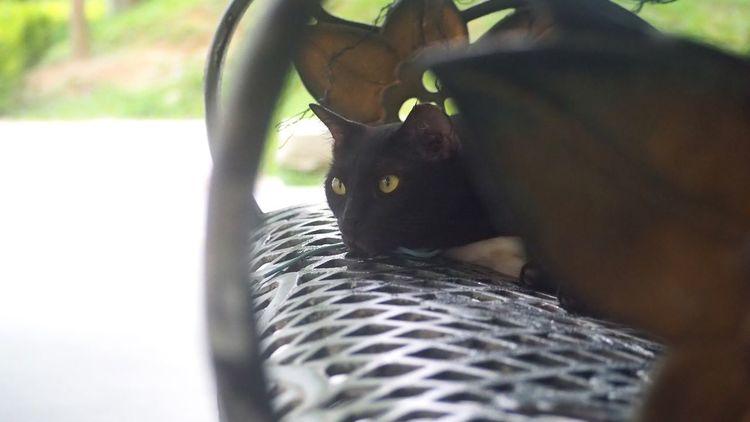 Pets Domestic Cat One Animal Domestic Animals Feline Cat Black Cat Black Cat Photography Cats Of EyeEm