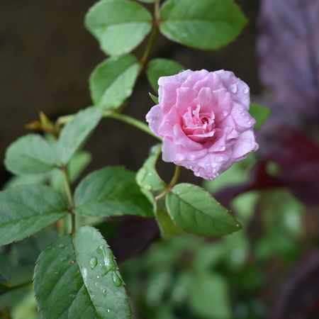 Pink Color Plant Nature Fragility Freshness No People Beauty In Nature Eyeem Market