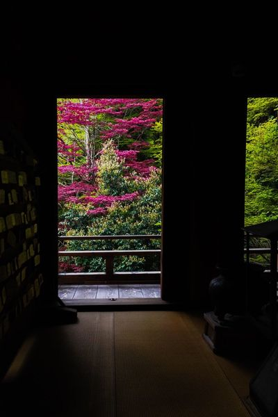 Plant Nature Indoors  No People Growth Flower Day Maple Maple Tree Red Maple Trees Temple Looking Out Door Japan Nature Building Inside Inside The Building Architecture Frame Window